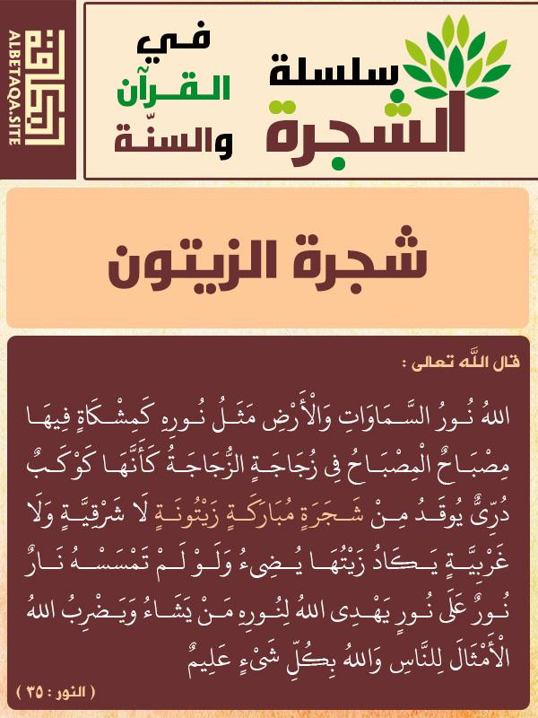 الشجرة في القرآن والسنة شجرة الزيتون موقع البطاقة الدعوي